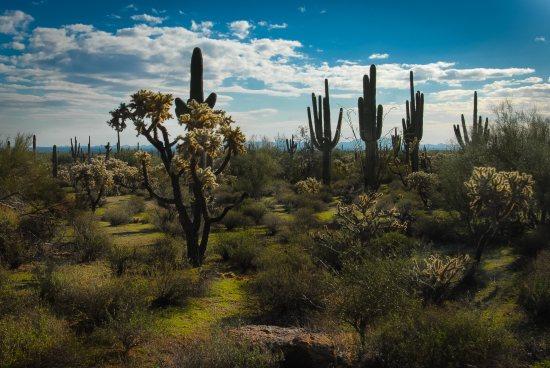 Az arizonai sivatag - don Juan világa